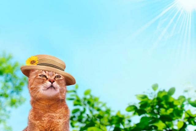 シミを予防するためには、日々の紫外線対策が欠かせません!